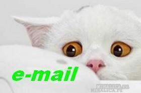 Как пользоваться почтой e-mail - полезные плюшки: одноразовые почты, подмена имени своей..!